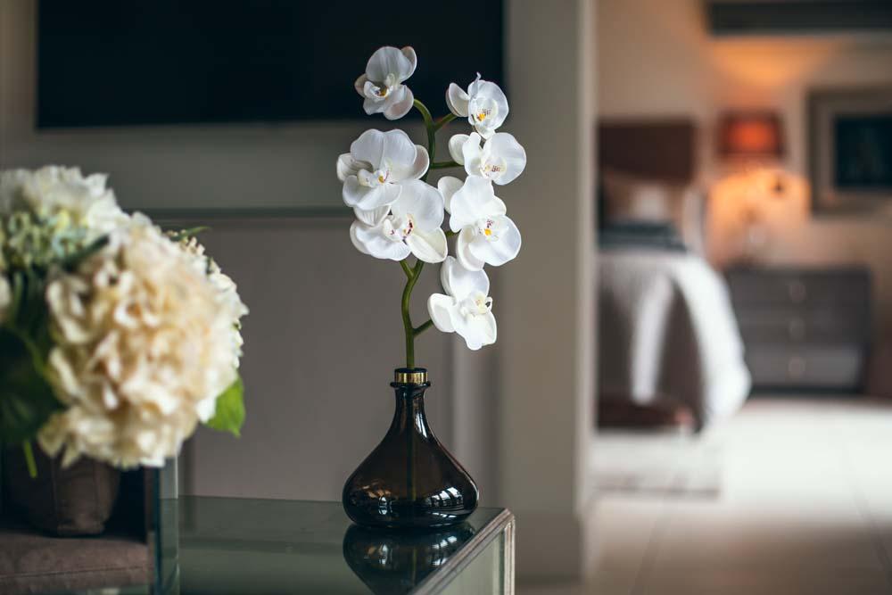Senti The Orchid