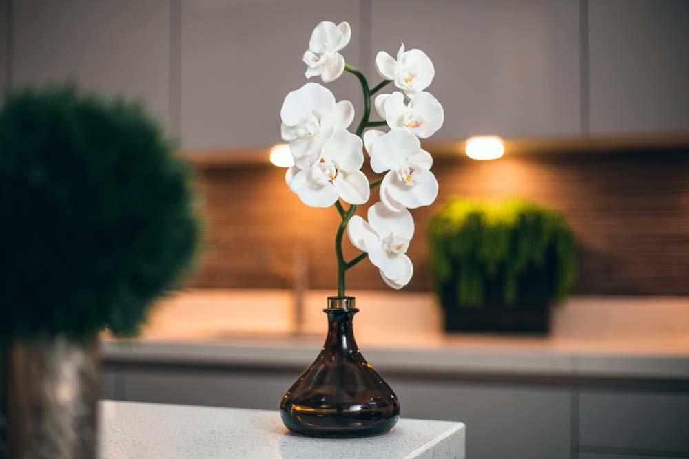 Senti Orchid