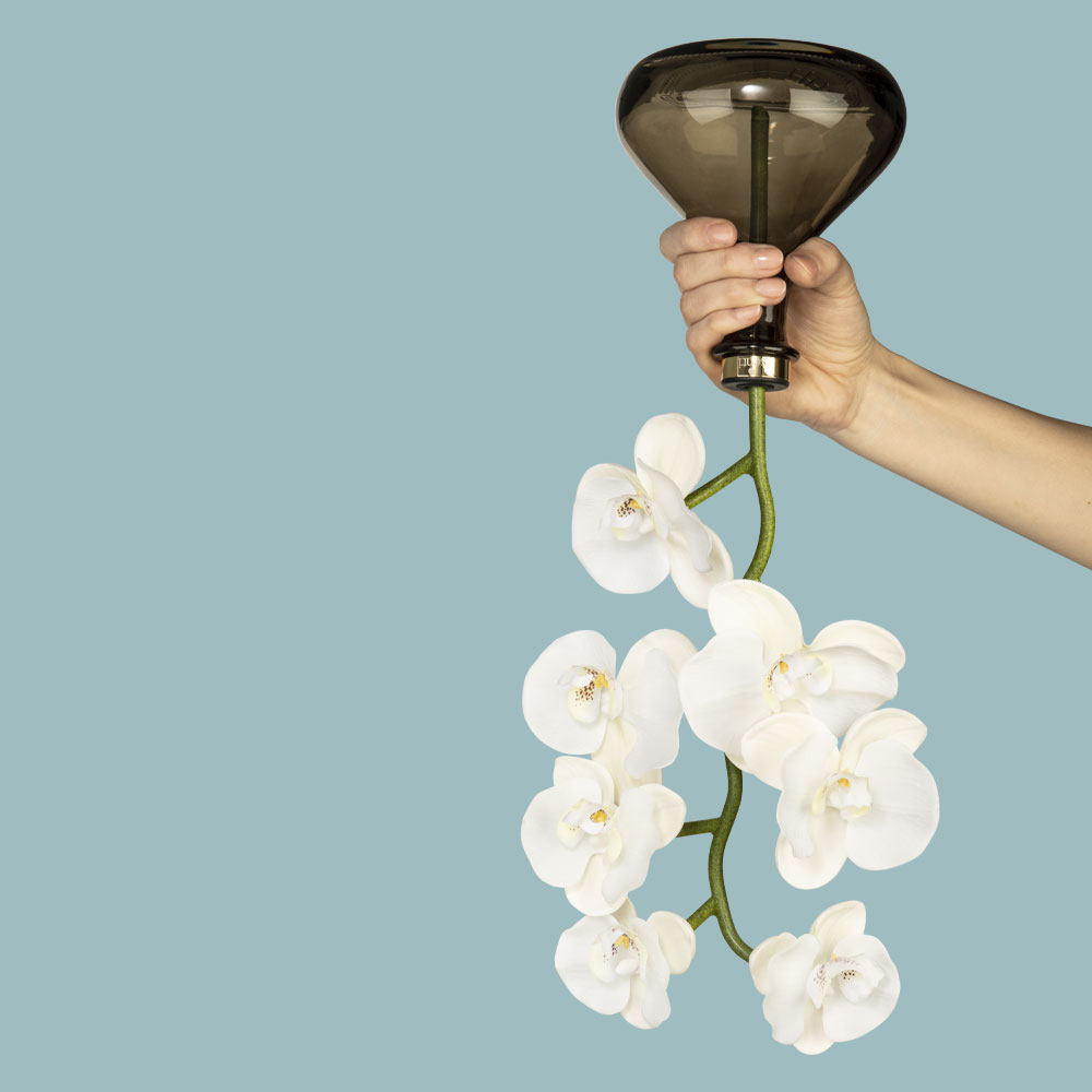 Senti-The-Orchid-Upside-down
