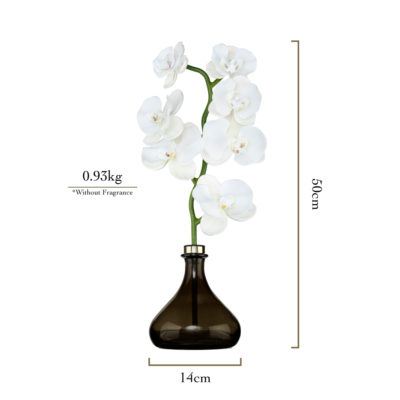 Senti-The-Orchid-Measurements