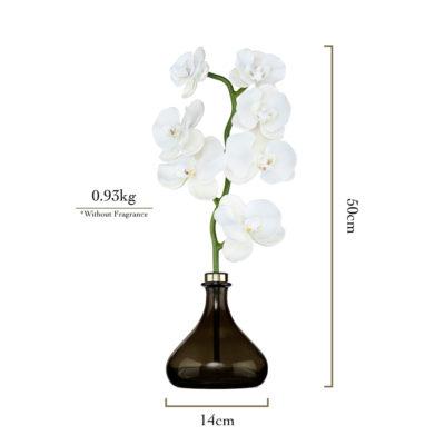 Senti-The-Orchid-Measurements